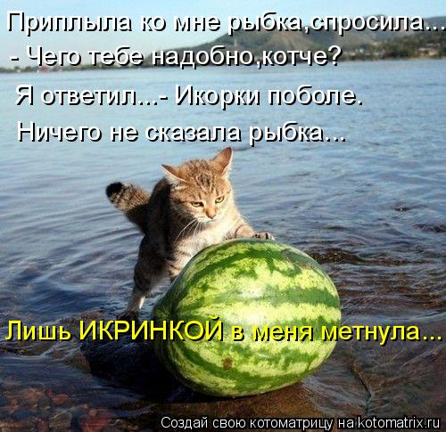 Котоматрица: Приплыла ко мне рыбка,спросила... - Чего тебе надобно,котче? Я ответил...- Икорки поболе. Ничего не сказала рыбка... Лишь ИКРИНКОЙ в меня метнула