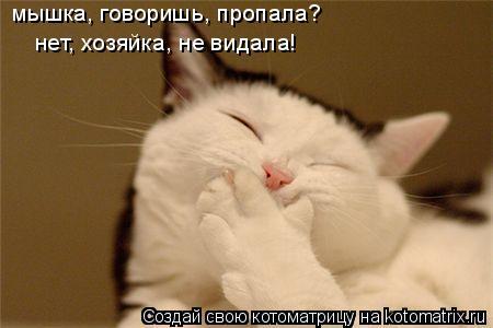 Котоматрица: мышка, говоришь, пропала?  нет, хозяйка, не видала!