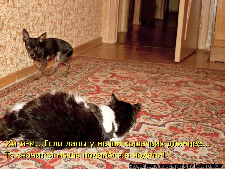 Котоматрица: Хм-м-м...Если лапы у мыши кошачьих длиннее... То значится мышь подалАся в модели!!!