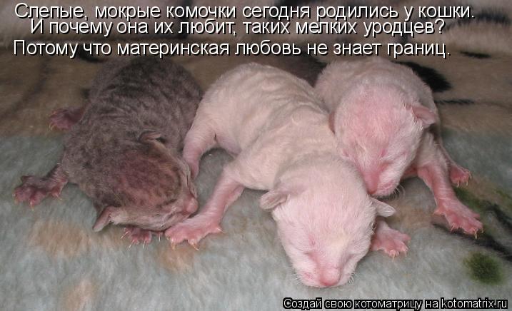 Котоматрица: Слепые, мокрые комочки сегодня родились у кошки. И почему она их любит, таких мелких уродцев? Потому что материнская любовь не знает границ.