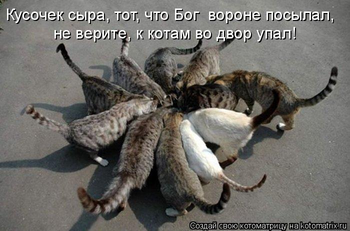 Котоматрица: Кусочек сыра, тот, что Бог  вороне посылал, не верите, к котам во двор упал!
