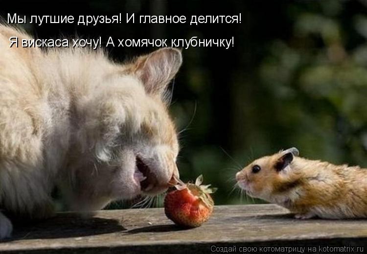 Котоматрица: Мы лутшие друзья! И главное делится! Я вискаса хочу! А хомячок клубничку!