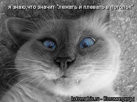 """Котоматрица: я знаю,что значит """"лежать и плевать в потолок"""""""
