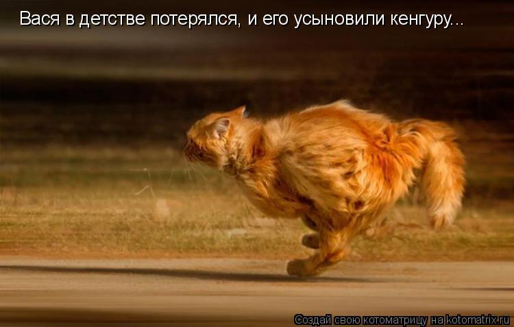 Котоматрица: Вася в детстве потерялся, и его усыновили кенгуру...