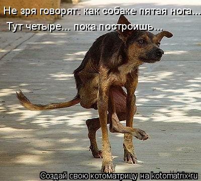 Котоматрица: Не зря говорят: как собаке пятая нога... Тут четыре... пока построишь...