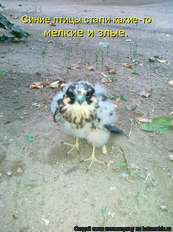 Котоматрица: Синие птицы стали какие-то мелкие и злые.
