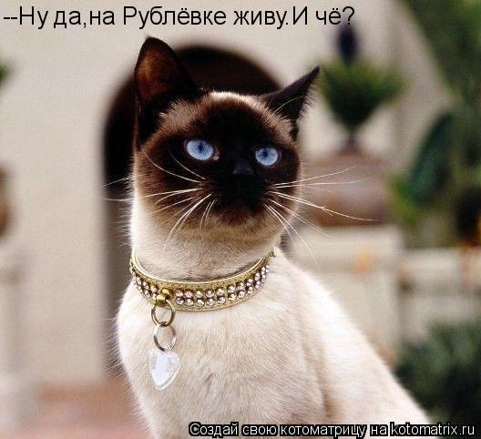 Котоматрица: --Ну да,на Рублёвке живу.И чё?
