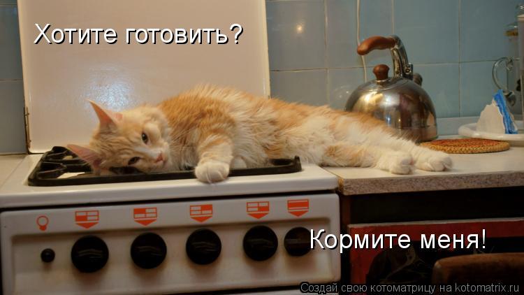 Котоматрица: Хотите готовить? Кормите меня!