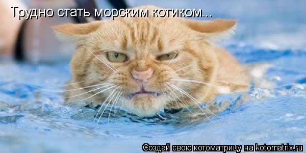 Котоматрица: Трудно стать морским котиком...