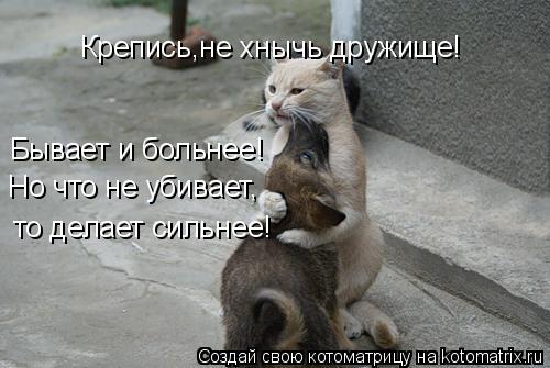 Котоматрица: Крепись,не хнычь дружище! Бывает и больнее! Но что не убивает, то делает сильнее!