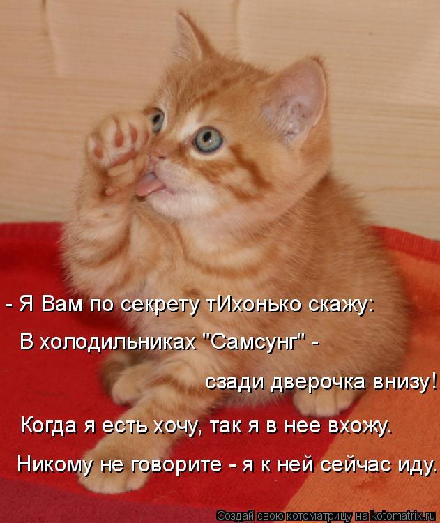 """Котоматрица: - Я Вам по секрету тИхонько скажу: В холодильниках """"Самсунг"""" -  сзади дверочка внизу! Когда я есть хочу, так я в нее вхожу. Никому не говорите - я"""