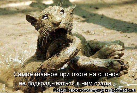 Котоматрица: Самое главное при охоте на слонов не подкрадываться к ним сзади...