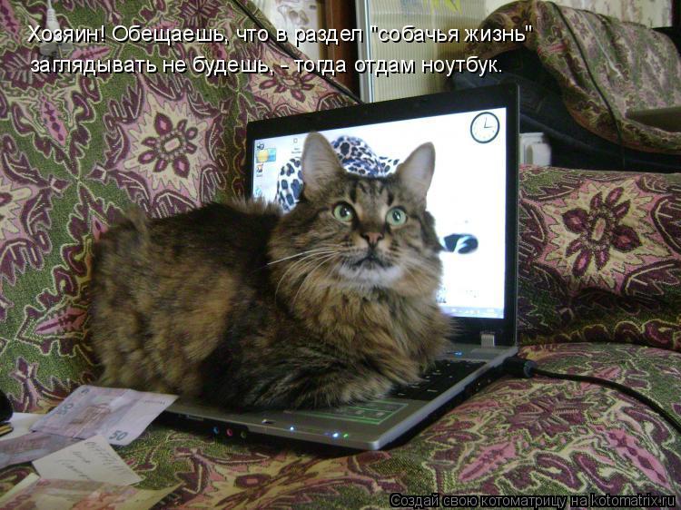 """Котоматрица: Хозяин! Обещаешь, что в раздел """"собачья жизнь"""" заглядывать не будешь, - тогда отдам ноутбук."""