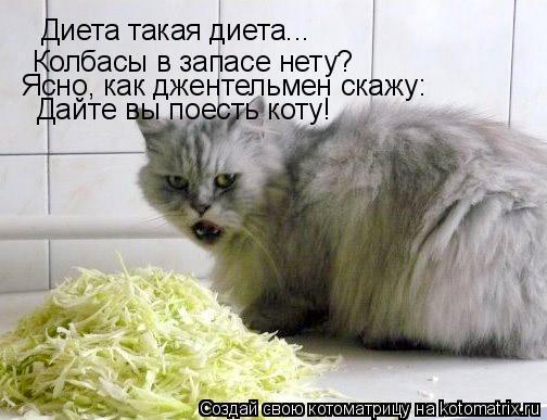 Кот дайте поесть