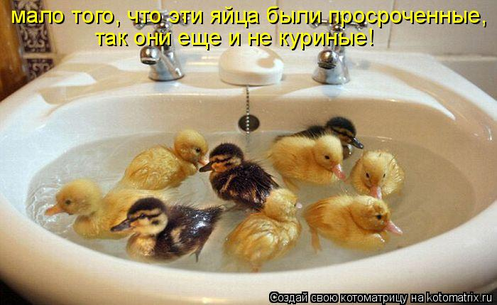http://kotomatrix.ru/images/lolz/2011/05/12/905712.jpg