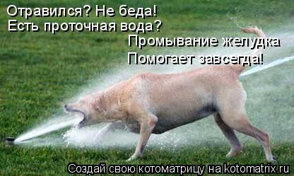 Котоматрица: Отравился? Не беда! Есть проточная вода? Промывание желудка Помогает завсегда!