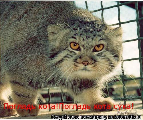 Котоматрица: Погладь кота!Погладь кота сука!
