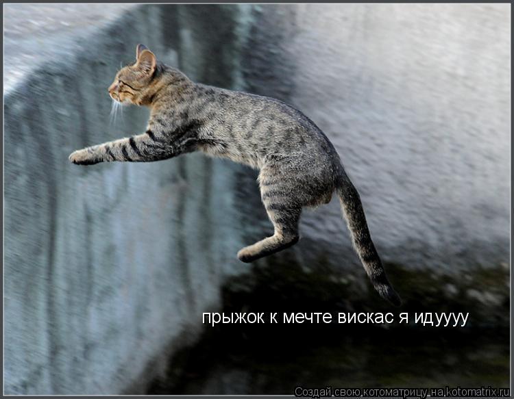 Котоматрица: прыжок к мечте вискас я идуууу