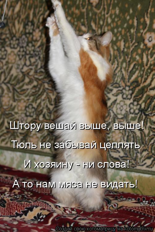 Котоматрица: Штору вешай выше, выше! Тюль не забывай цеплять И хозяину - ни слова! А то нам мяса не видать!