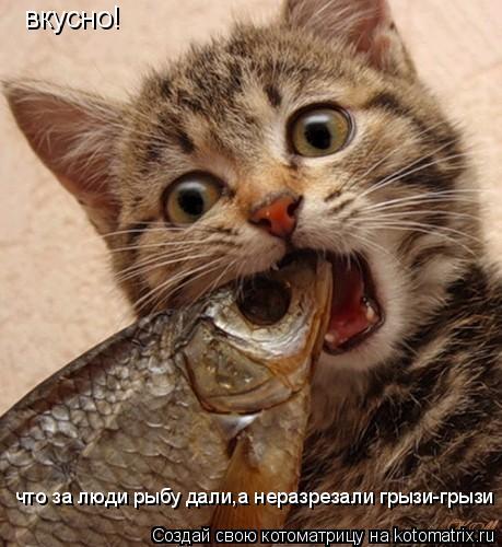 Котоматрица: вкусно!   что за люди рыбу дали,а неразрезали грызи-грызи