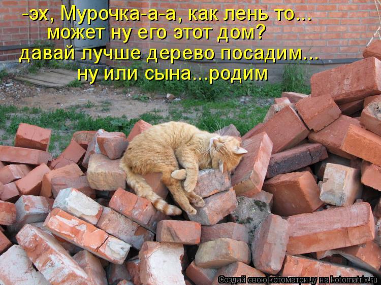 Котоматрица: -эх, Мурочка-а-а, как лень то... может ну его этот дом? давай лучше дерево посадим... ну или сына...родим