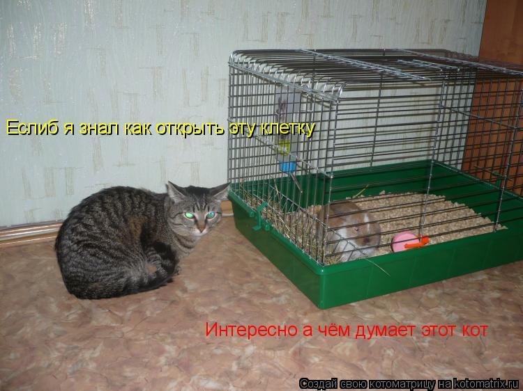 Котоматрица: Интересно а чём думает этот кот Еслиб я знал как открыть эту клетку