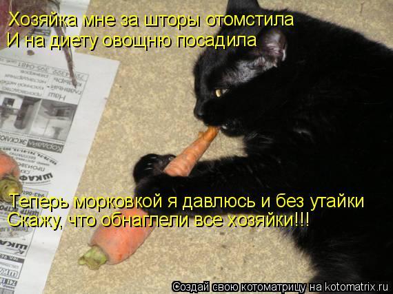 Котоматрица: Хозяйка мне за шторы отомстила И на диету овощню посадила Теперь морковкой я давлюсь и без утайки Скажу, что обнаглели все хозяйки!!!