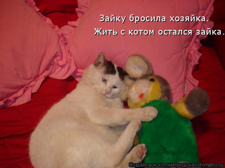 Котоматрица: Жить с котом остался зайка. Зайку бросила хозяйка.