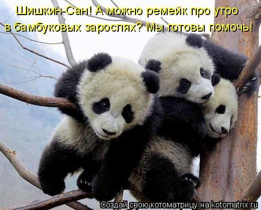 Котоматрица: Шишкин-Сан! А можно ремейк про утро в бамбуковых зарослях? Мы готовы помочь!