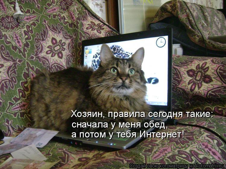 Котоматрица: Хозяин, правила сегодня такие: сначала у меня обед,  а потом у тебя Интернет!