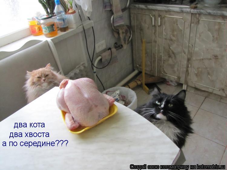 Котоматрица: два кота два хвоста а по середине???