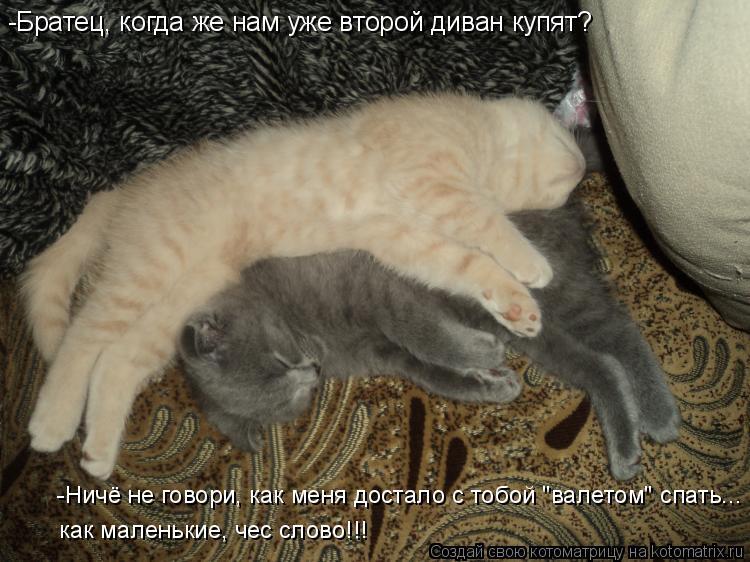 """Котоматрица: -Братец, когда же нам уже второй диван купят? -Ничё не говори, как меня достало с тобой """"валетом"""" спать... как маленькие, чес слово!!!"""