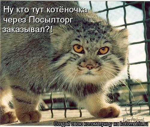 Котоматрица: Ну кто тут котёночка  через Посылторг  заказывал?!