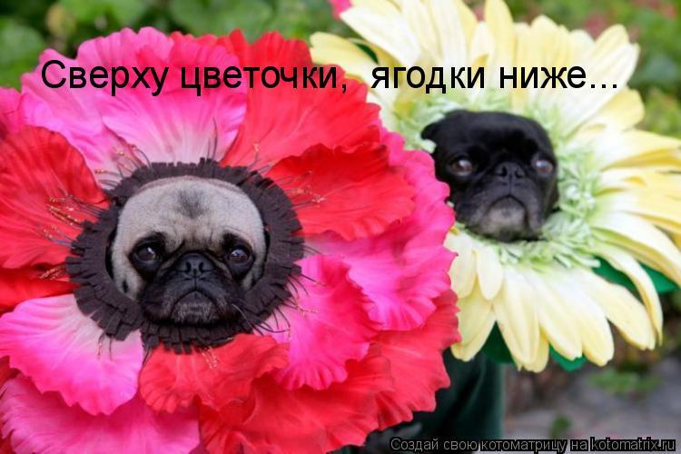 Котоматрица: Сверху цветочки,  ягодки ниже...