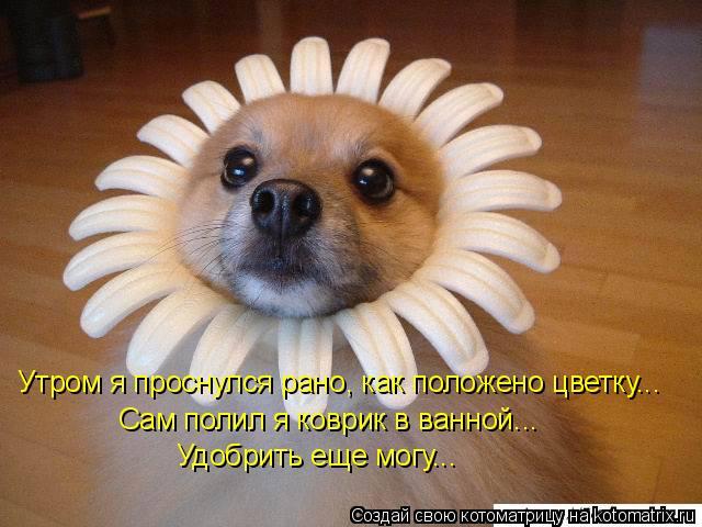Котоматрица - Утром я проснулся рано, как положено цветку... Сам полил я коврик в ва