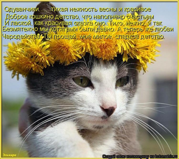 Котоматрица: Одуванчики.......тихая нежность весны и красивое Доброе кошкино детство, что наполнено счастьем И лаской, как красивая сказка оно. Тихо, нежно