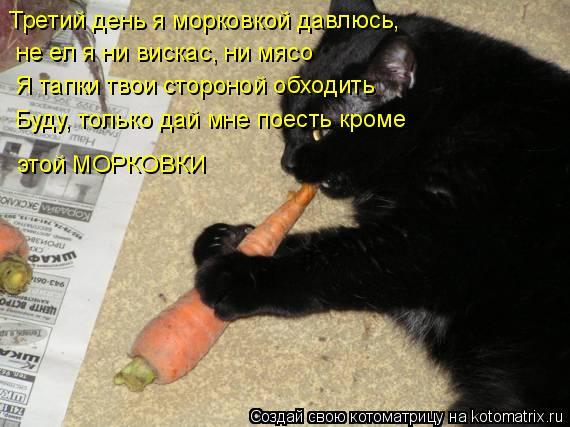 Котоматрица: Третий день я морковкой давлюсь, не ел я ни вискас, ни мясо Я тапки твои стороной обходить Буду, только дай мне поесть кроме  этой МОРКОВКИ