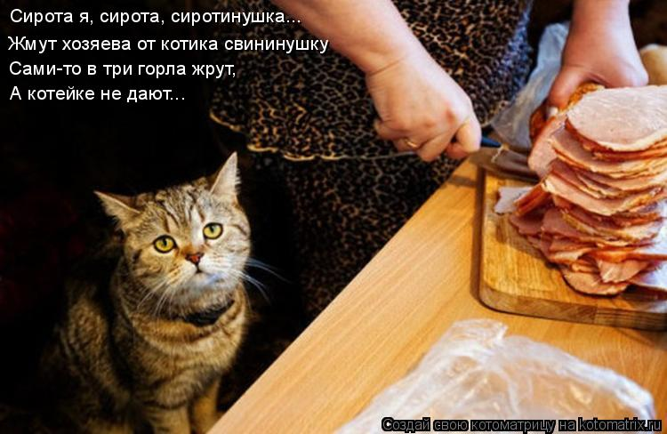 Котоматрица: Сирота я, сирота, сиротинушка... Жмут хозяева от котика свининушку Сами-то в три горла жрут, А котейке не дают...