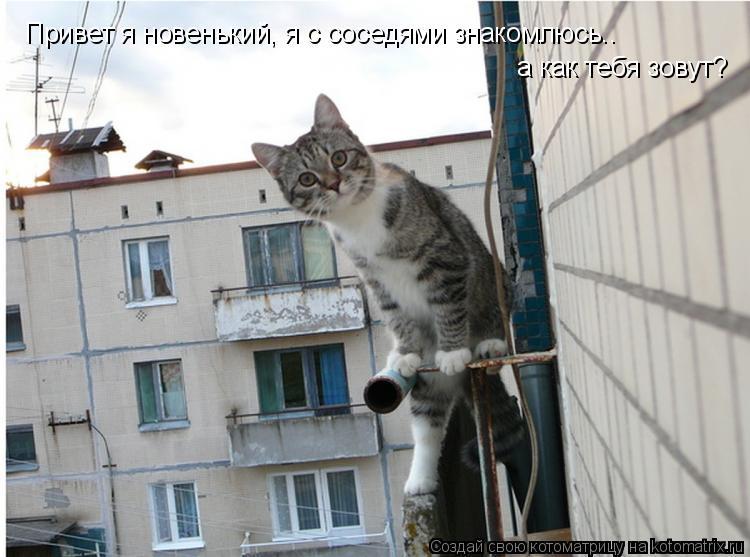 Котоматрица: Привет я новенький, я с соседями знакомлюсь.. а как тебя зовут?
