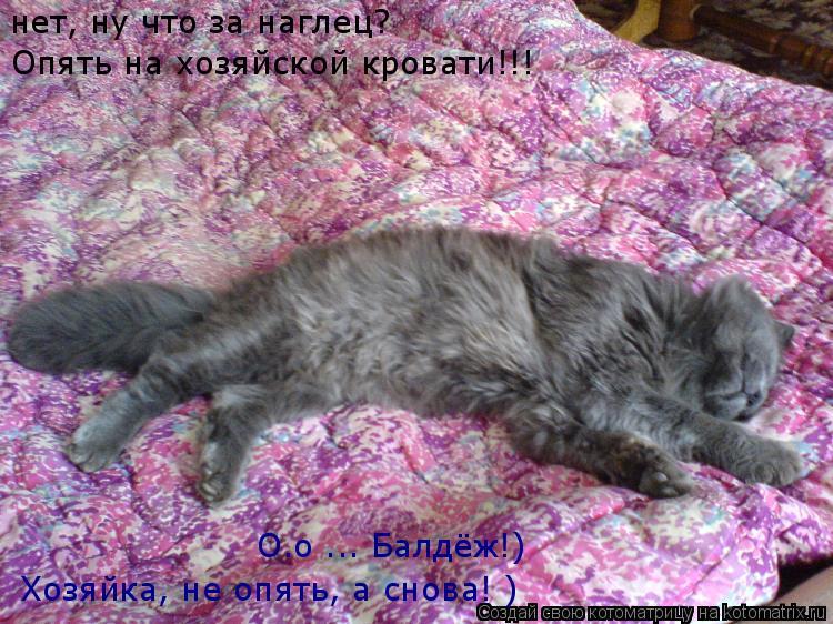 Котоматрица: О.о ... Балдёж!) нет, ну что за наглец? Опять на хозяйской кровати!!! Хозяйка, не опять, а снова! )