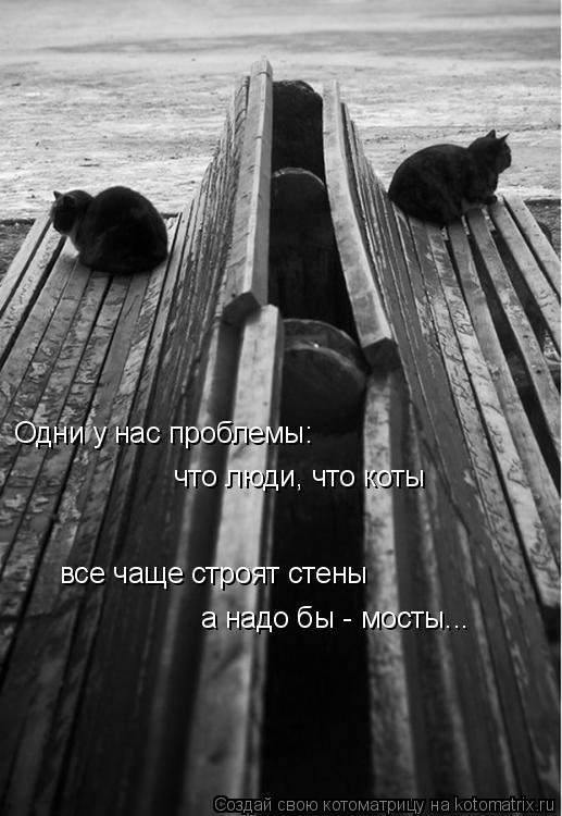 Котоматрица: Одни у нас проблемы: что люди, что коты все чаще строят стены а надо бы - мосты...
