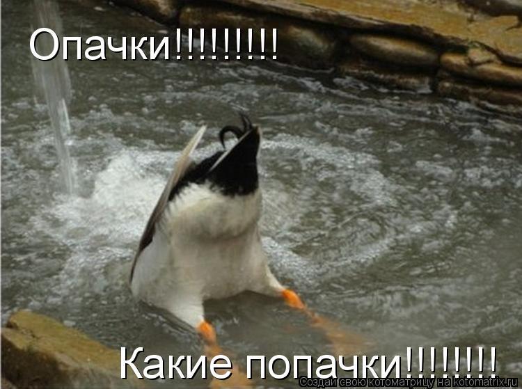 Котоматрица: Опачки!!!!!!!!! Какие попачки!!!!!!!!