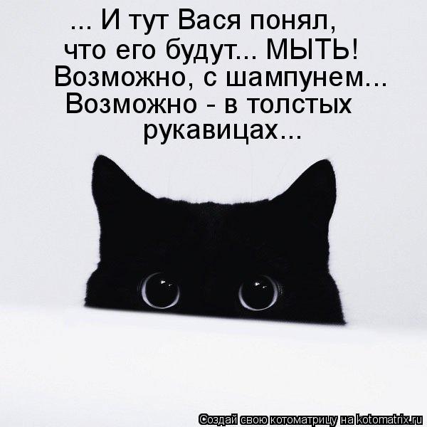 Котоматрица: ... И тут Вася понял, что его будут... МЫТЬ! Возможно, с шампунем... Возможно - в толстых рукавицах...