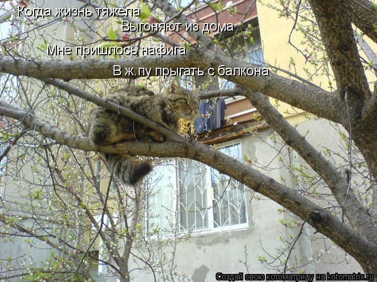 Котоматрица: Когда жизнь тяжела Выгоняют из дома Мне пришлось нафига В ж.пу прыгать с балкона