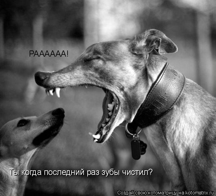 Котоматрица: РАААААА! Ты когда последний раз зубы чистил?