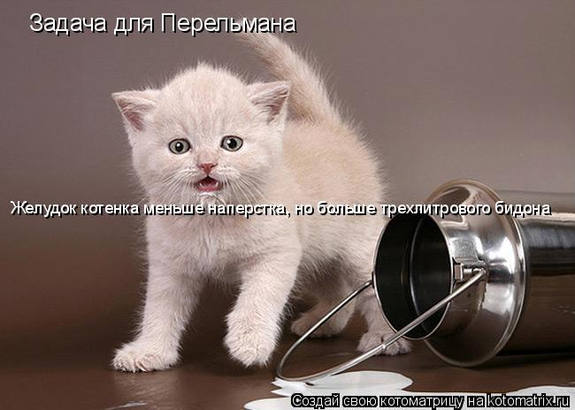 Котоматрица: Задача для Перельмана Желудок котенка меньше наперстка, но больше трехлитрового бидона