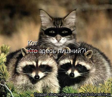 Котоматрица: Кто здесь лишний?! ___ Кот