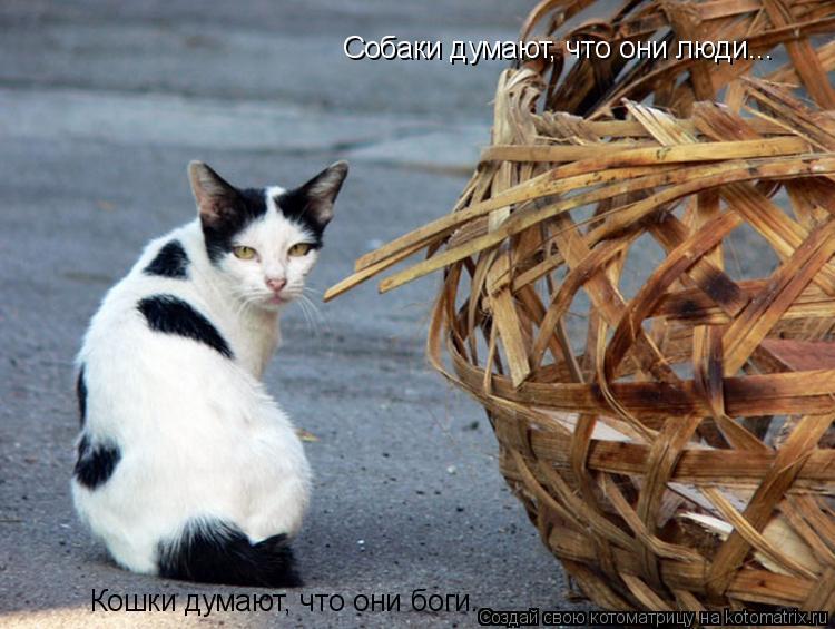 Котоматрица: Собаки думают, что они люди... Кошки думают, что они боги...
