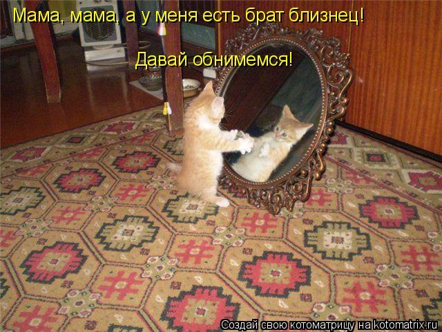 Котоматрица: Мама, мама, а у меня есть брат близнец! Давай обнимемся!