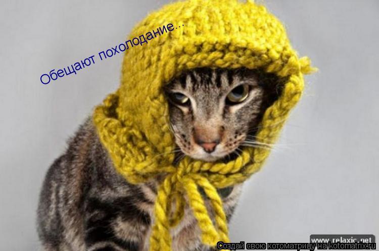 Котоматрица: Обещают похолодание...